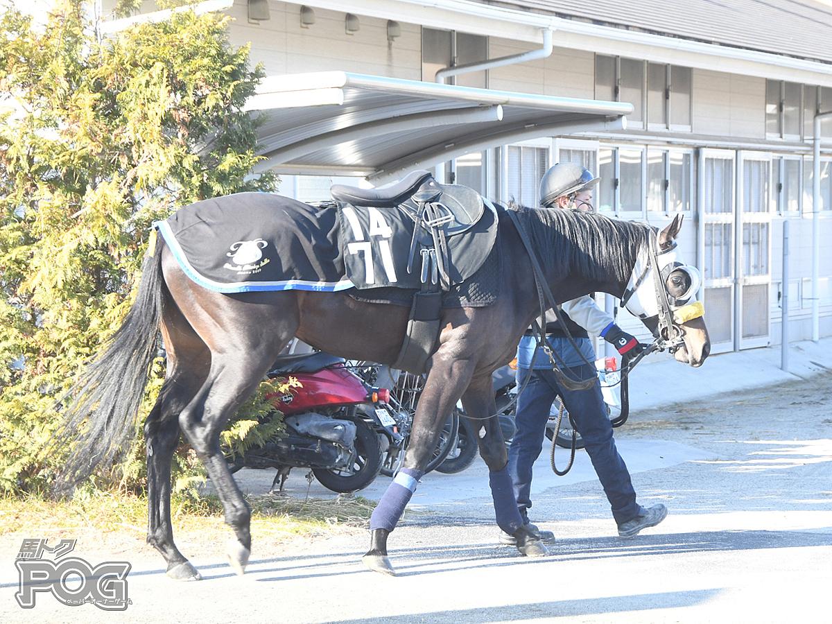 マイティバローズの馬体写真