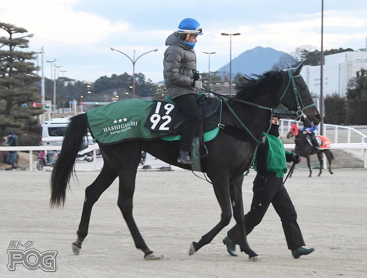 ダノンキャンディの馬体写真