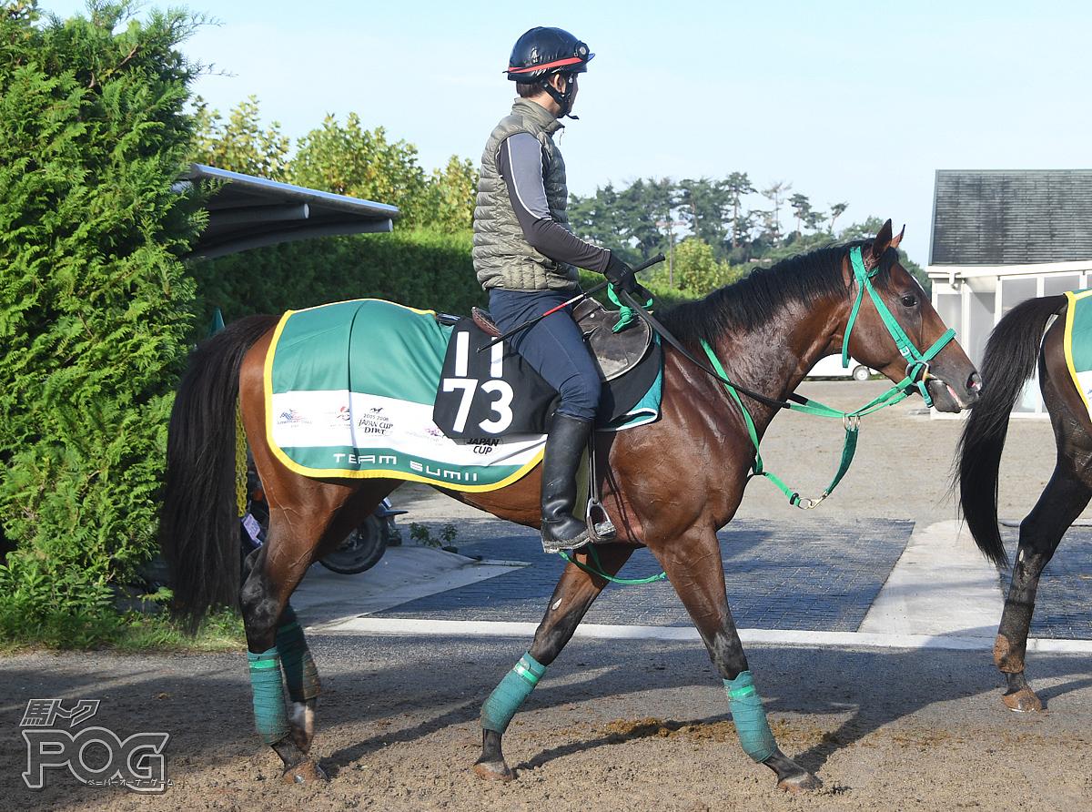ロイヤルバローズの馬体写真