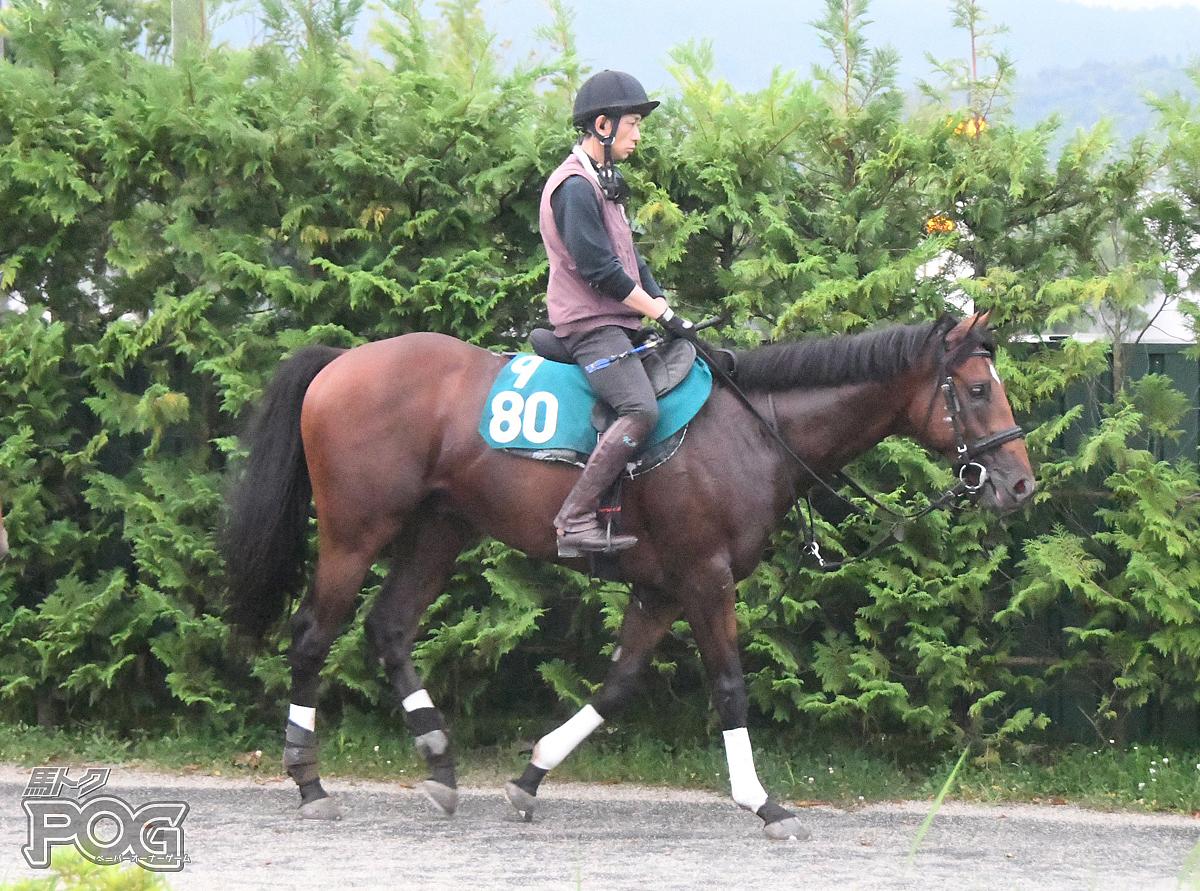 メガリージョンの馬体写真