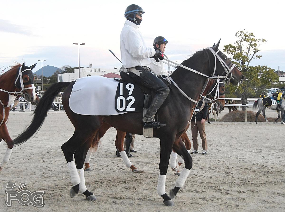 キングスクロスの馬体写真