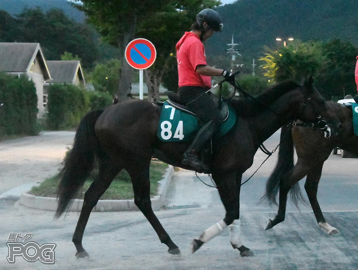 サンライズカナロアの馬体写真