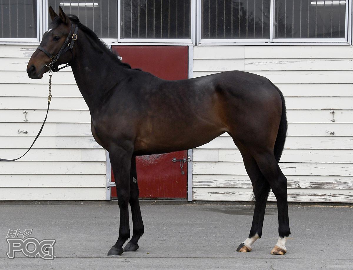 カゼニタツの馬体写真
