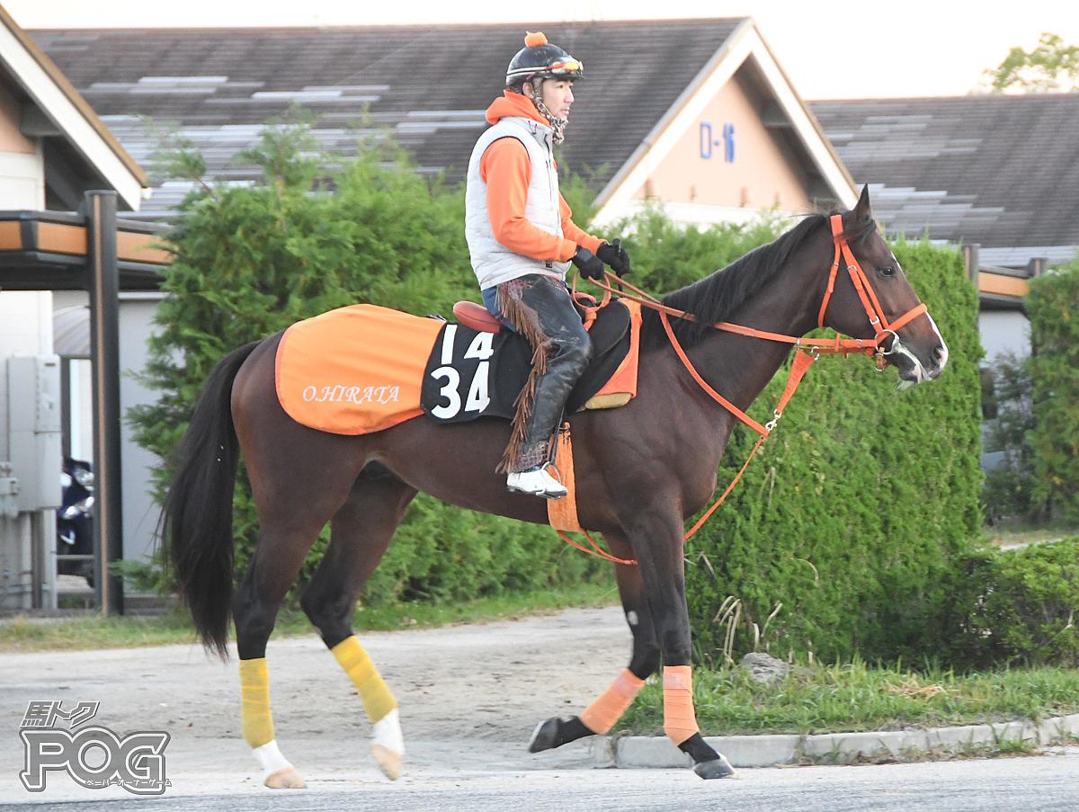 サンライズルークの馬体写真