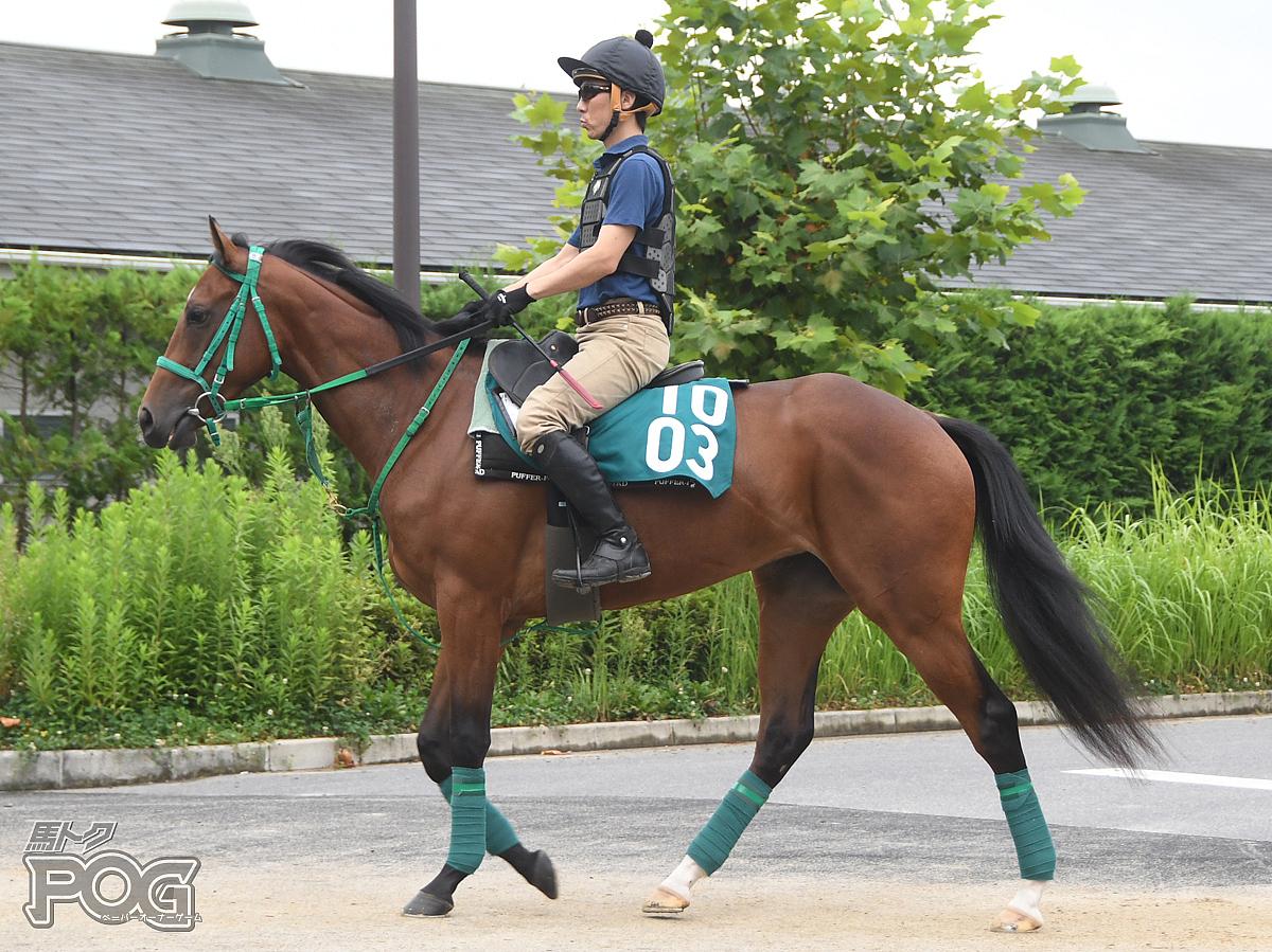 サトノワルキューレの馬体写真