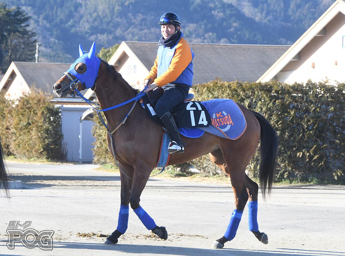 エペルネの馬体写真