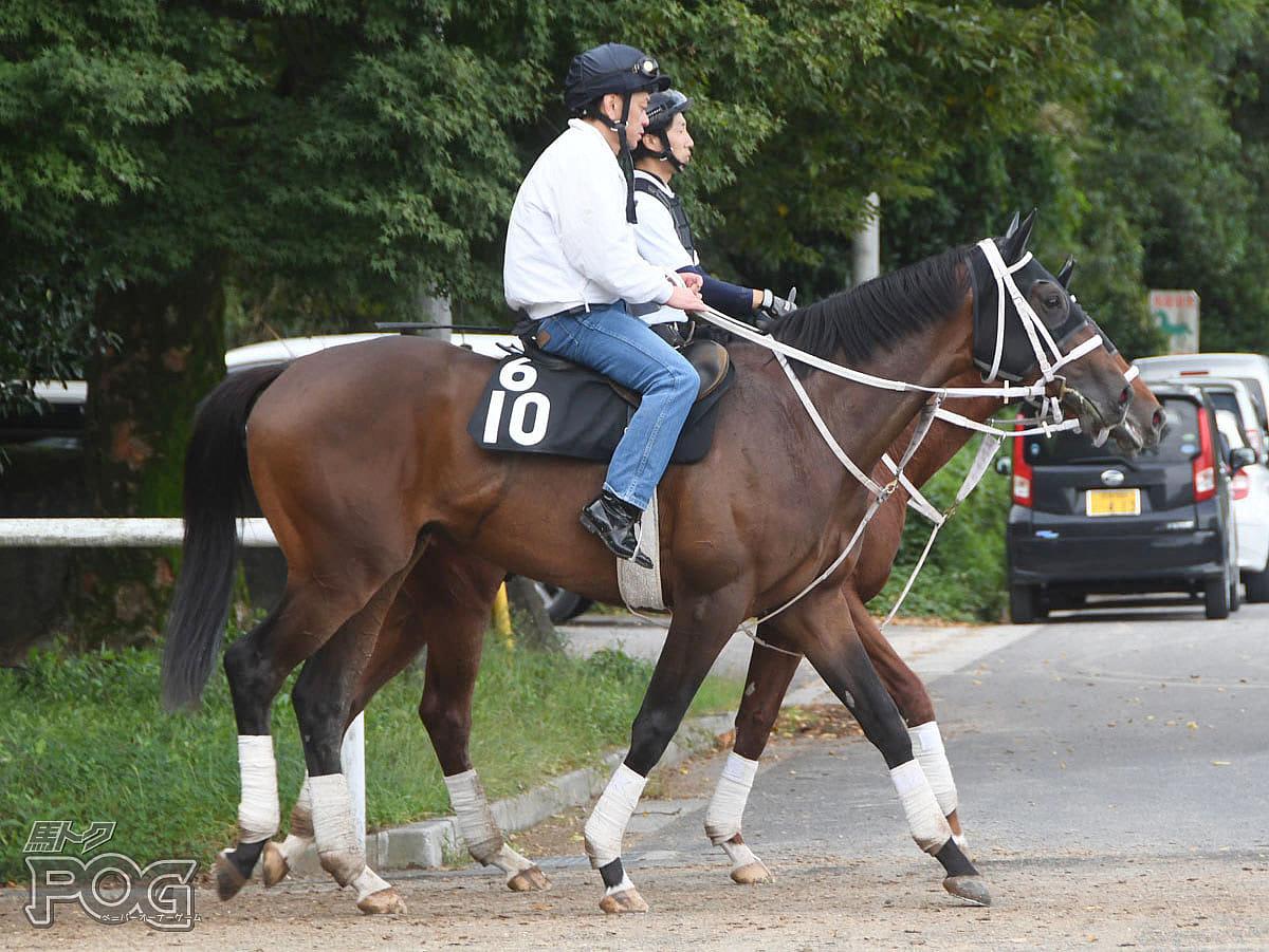 ダノンフォーチュンの馬体写真
