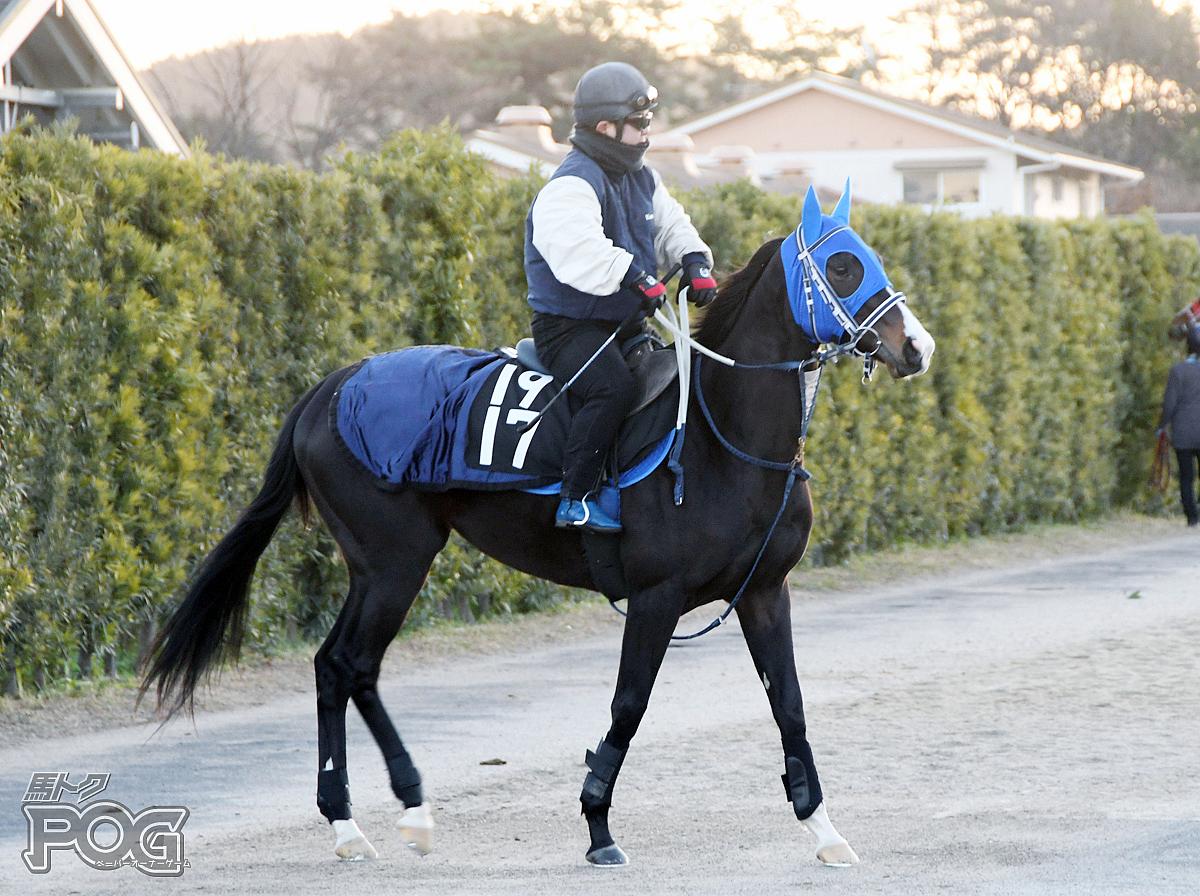 イエローマリンバの馬体写真
