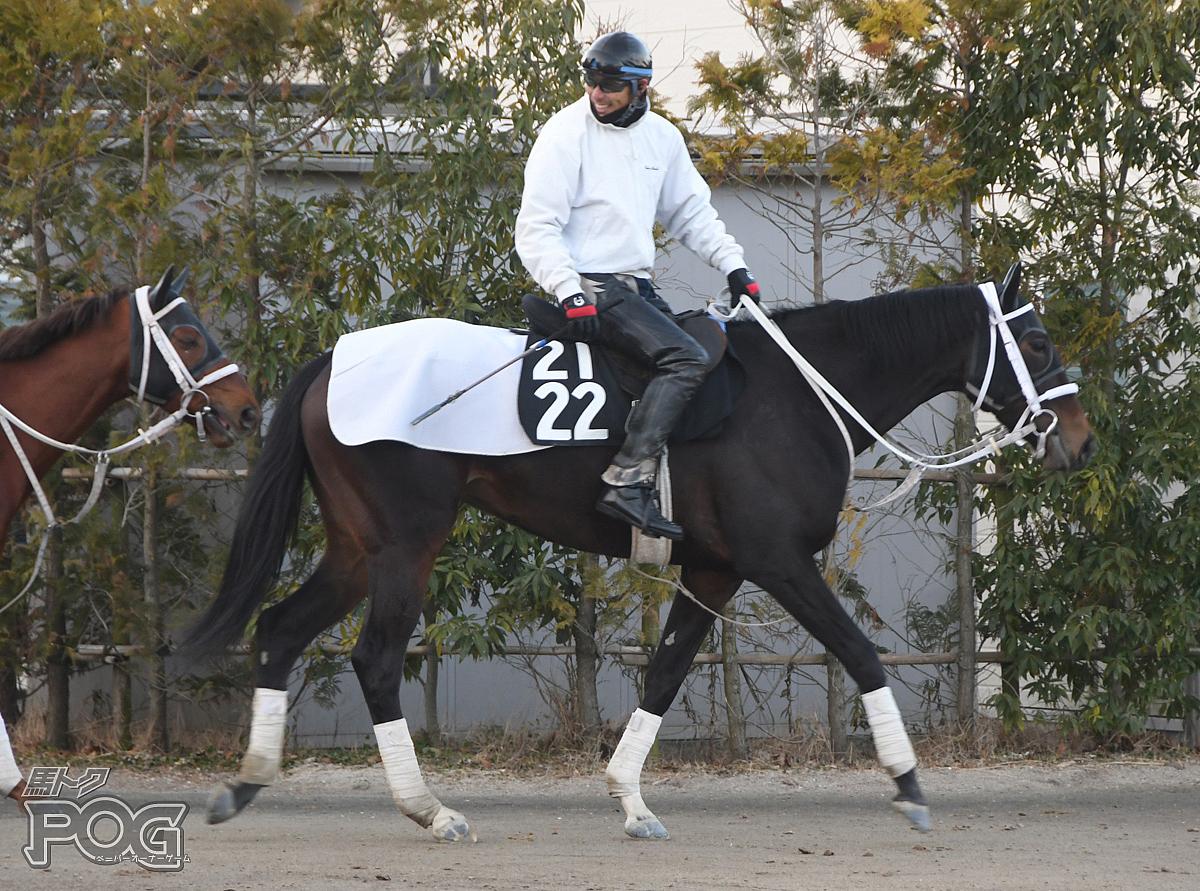 メモリーコロネットの馬体写真