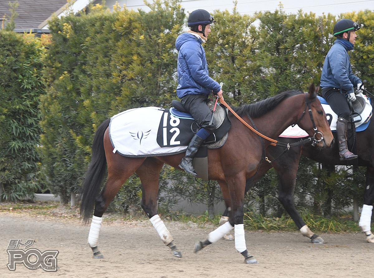 ロンドンシーズンの馬体写真