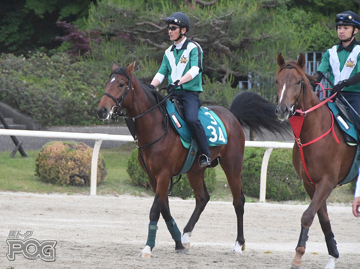 スターフォースの馬体写真