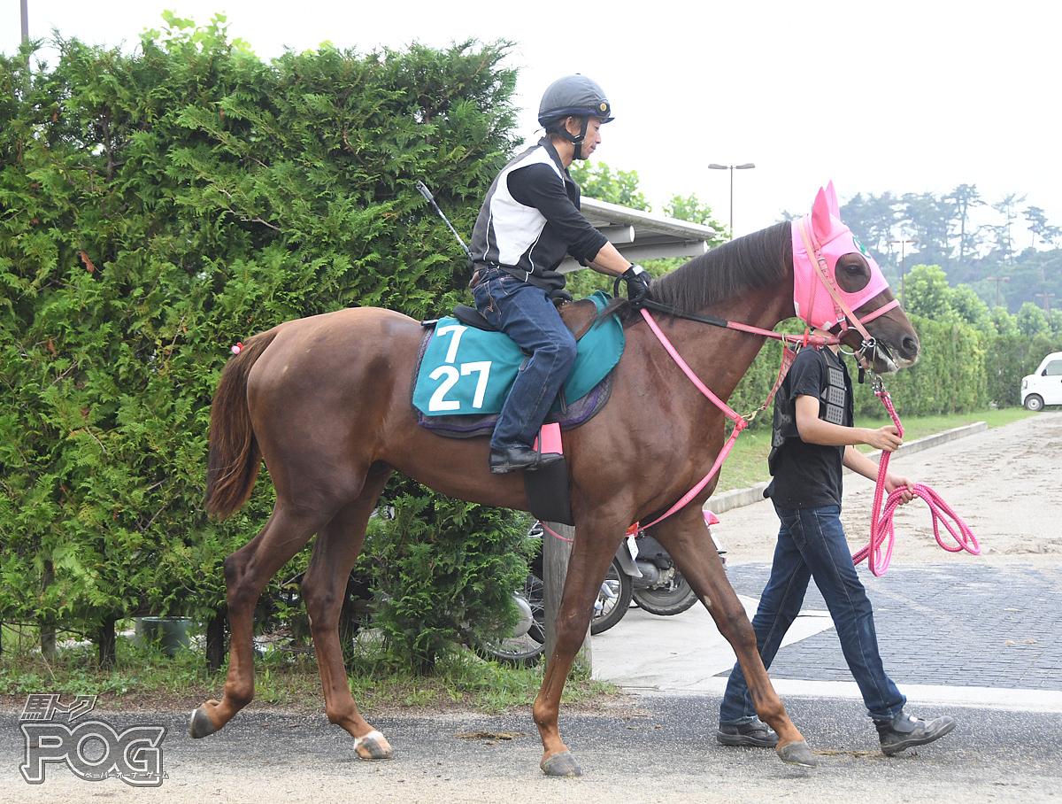 コウエイスーシェフの馬体写真