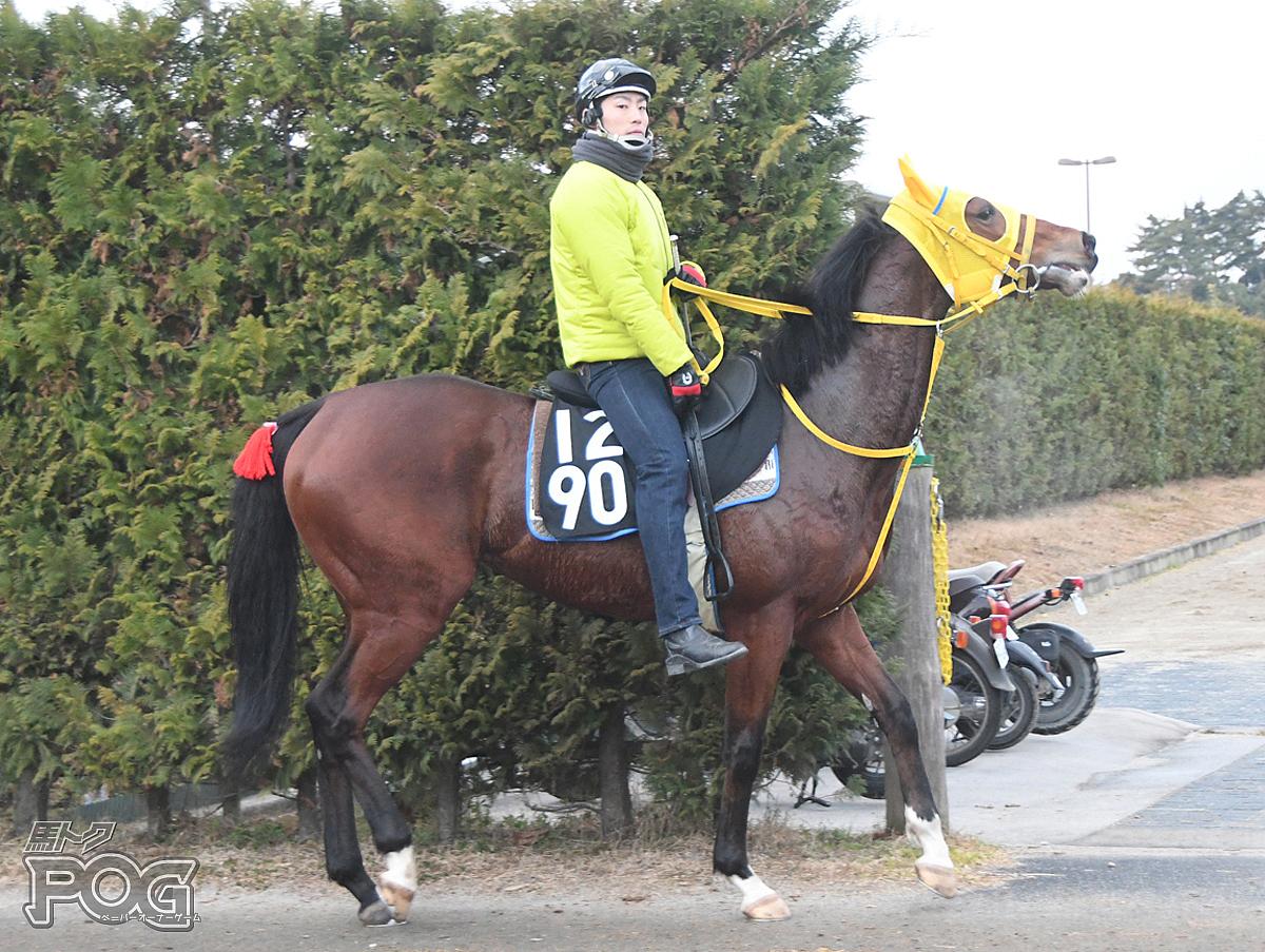 レティーツィアの馬体写真