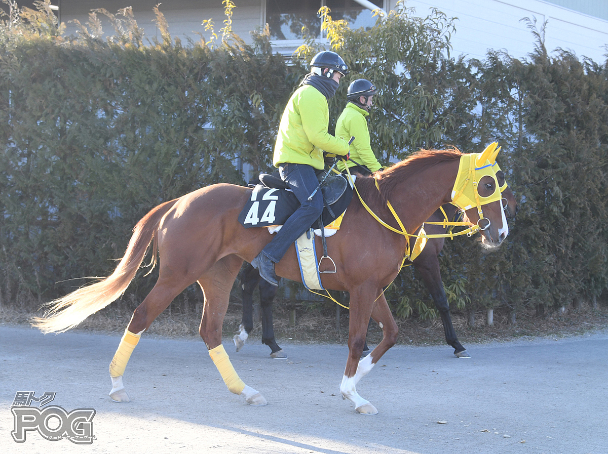 ナリタシェリーの馬体写真