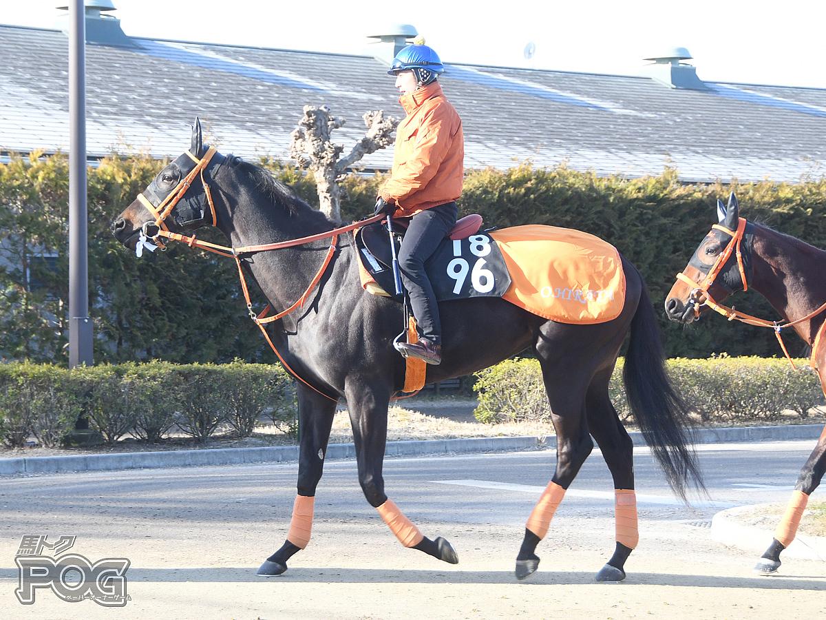 エテルニテの馬体写真