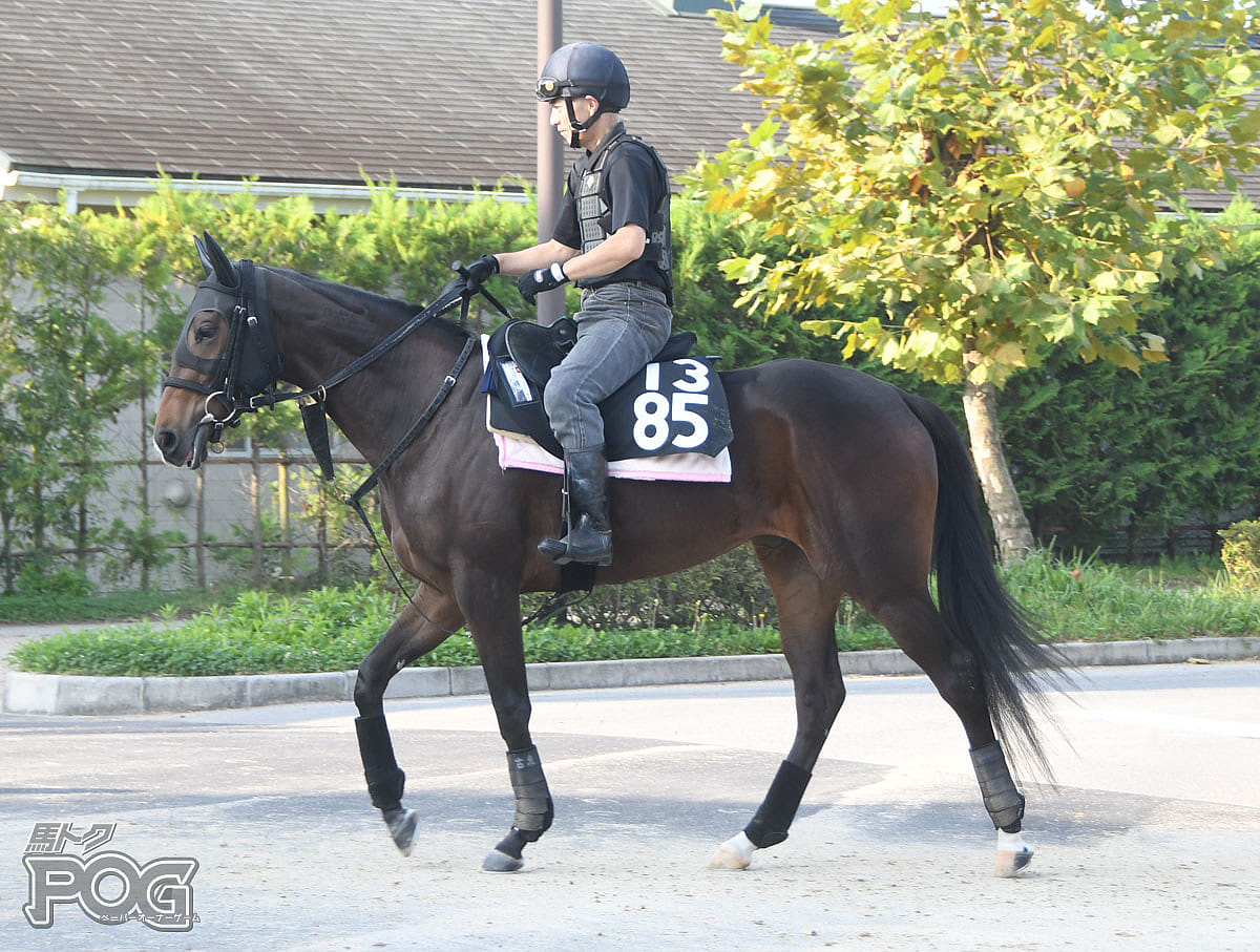 マリアバローズの馬体写真