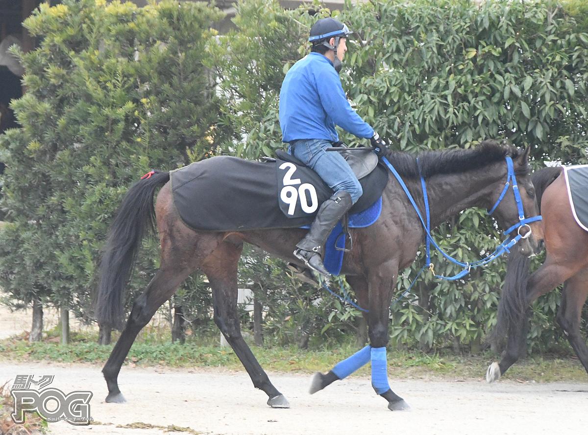 クリノザビエルの馬体写真
