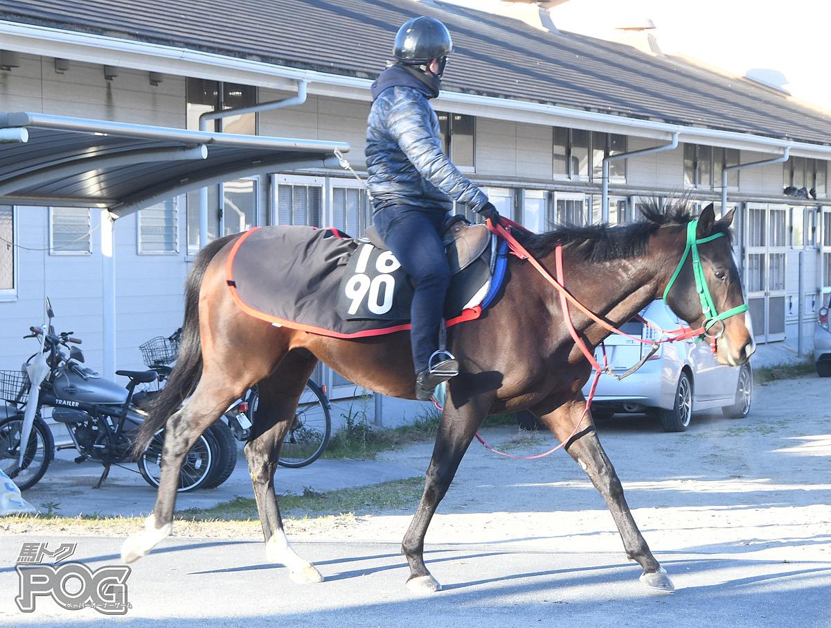 ナリタリュウの馬体写真