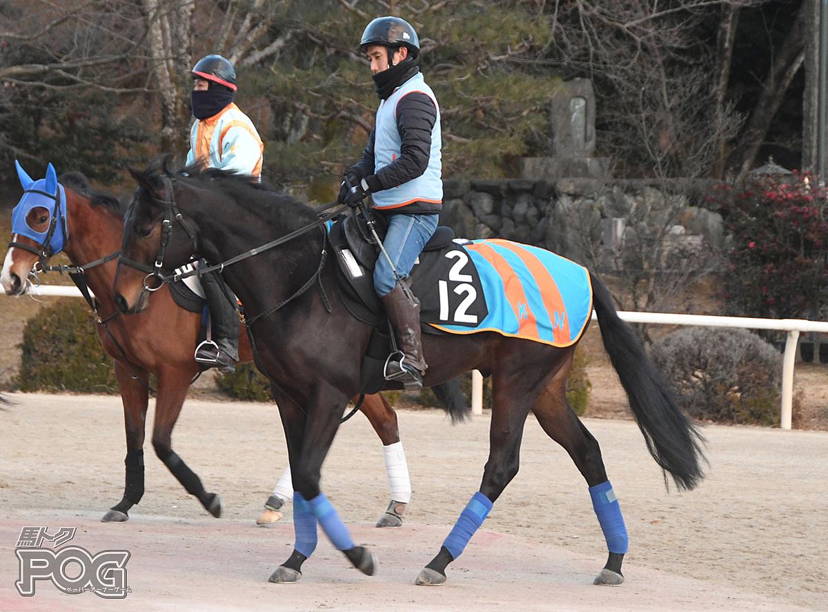 カズフィンテックの馬体写真
