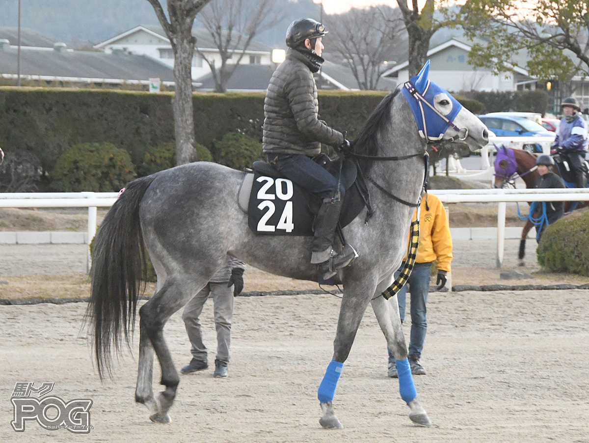 メイショウワザモノの馬体写真