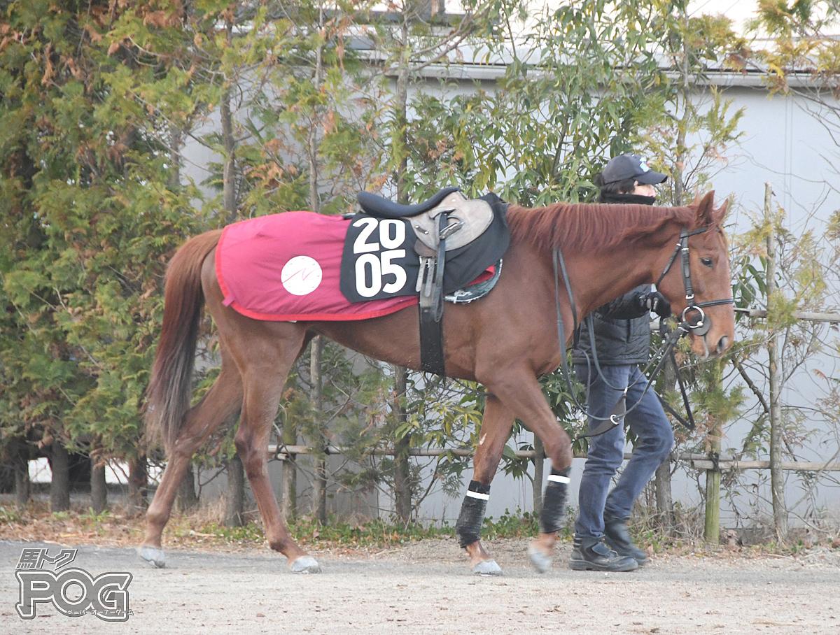 エコモマイの馬体写真