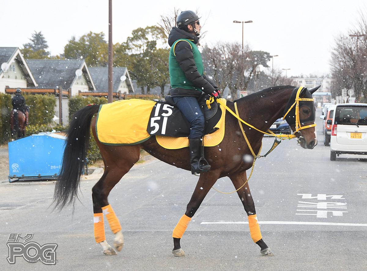 キタノタマテバコの馬体写真