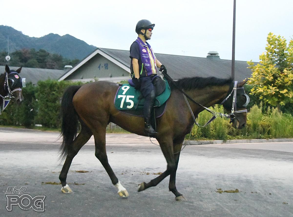 ショウナンバローロの馬体写真