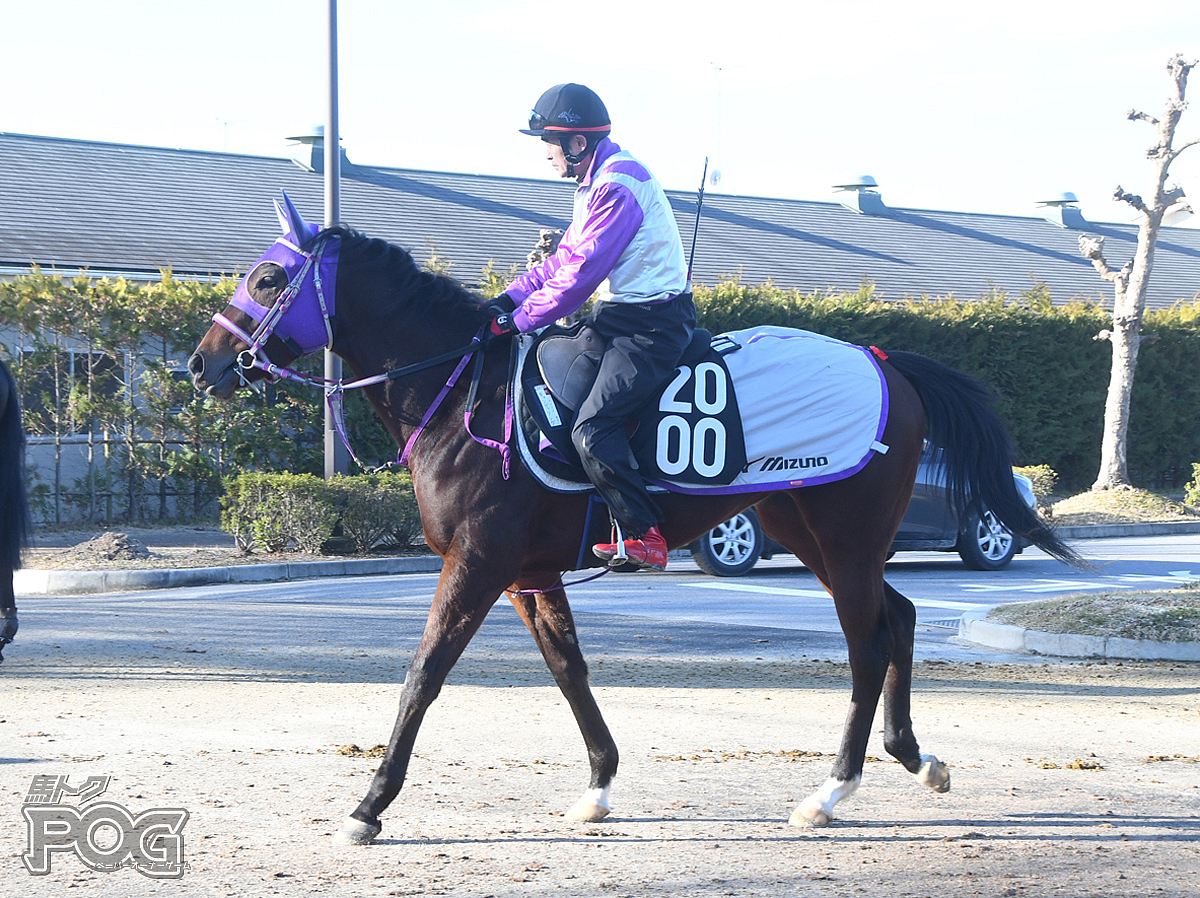 キャンディソングの馬体写真