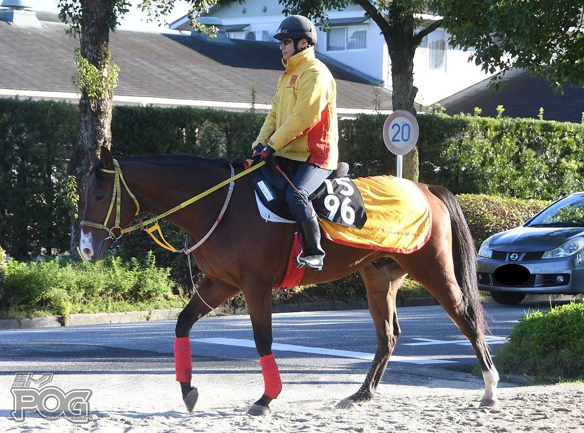 シンボリフォースの馬体写真