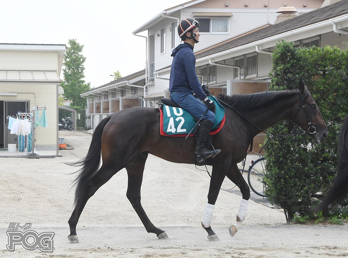 カレンガリアードの馬体写真
