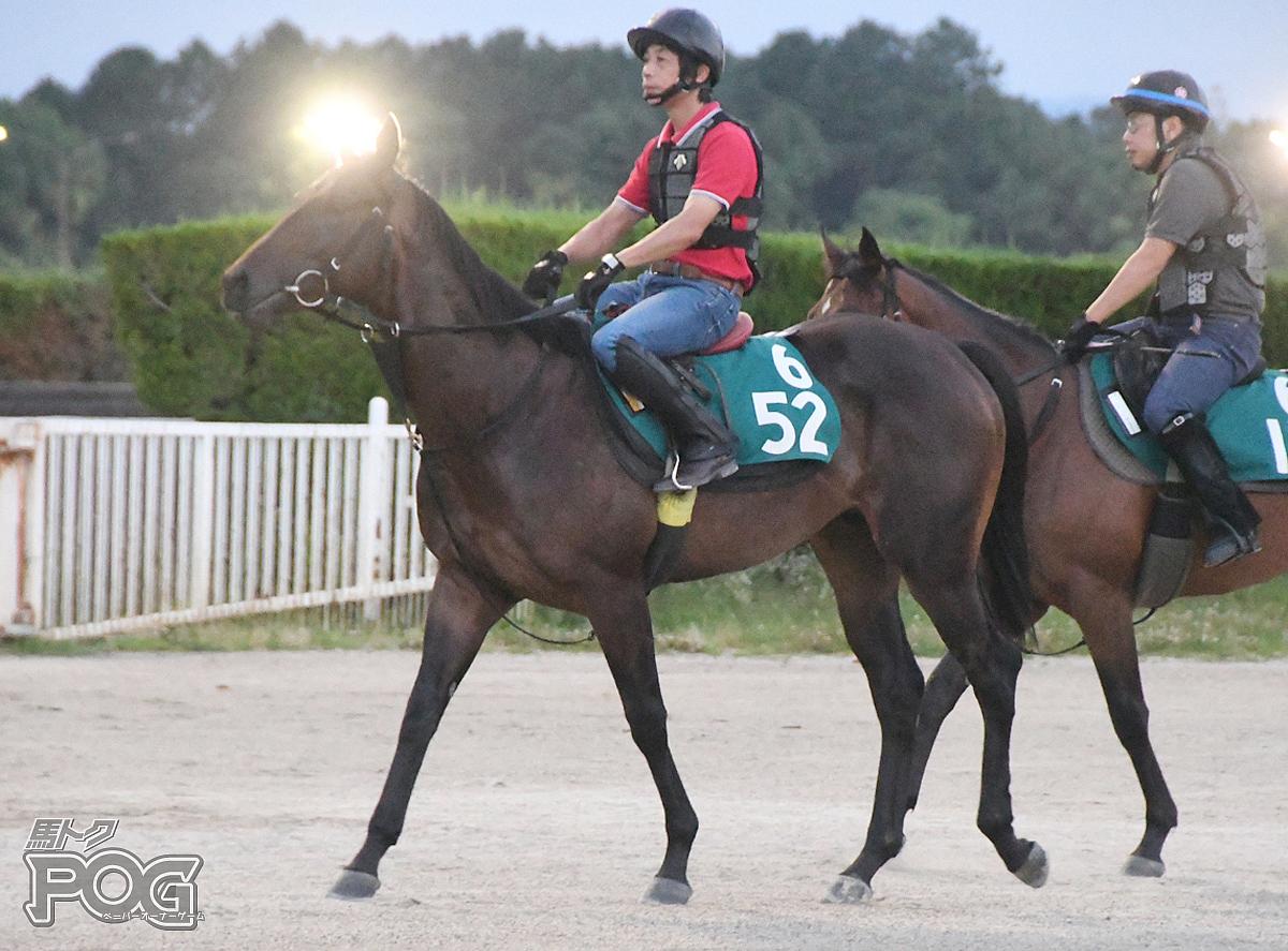 シゲルエダマメの馬体写真