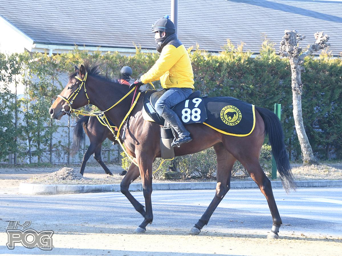 ラカマロネスの馬体写真