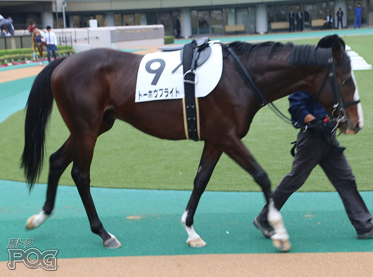 トーホウフライトの馬体写真