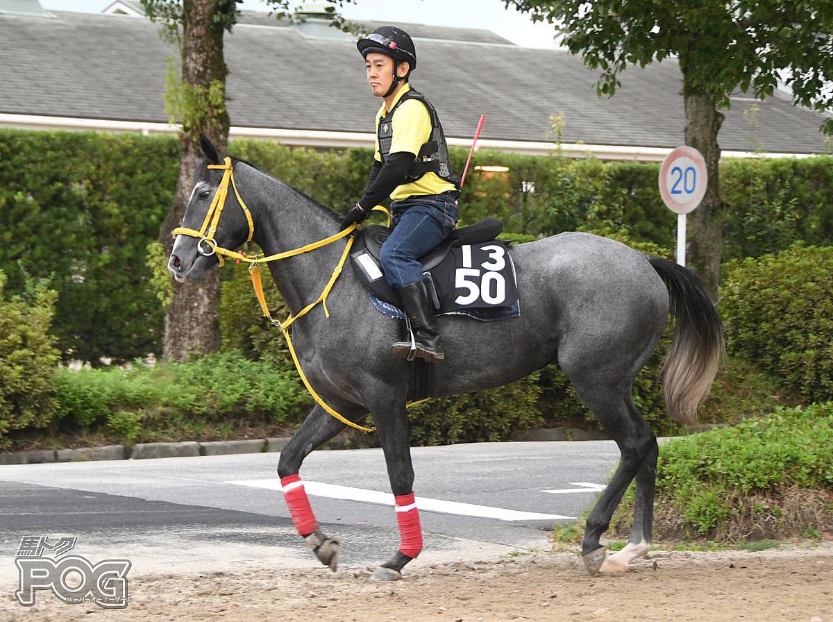 ジョーカーの馬体写真