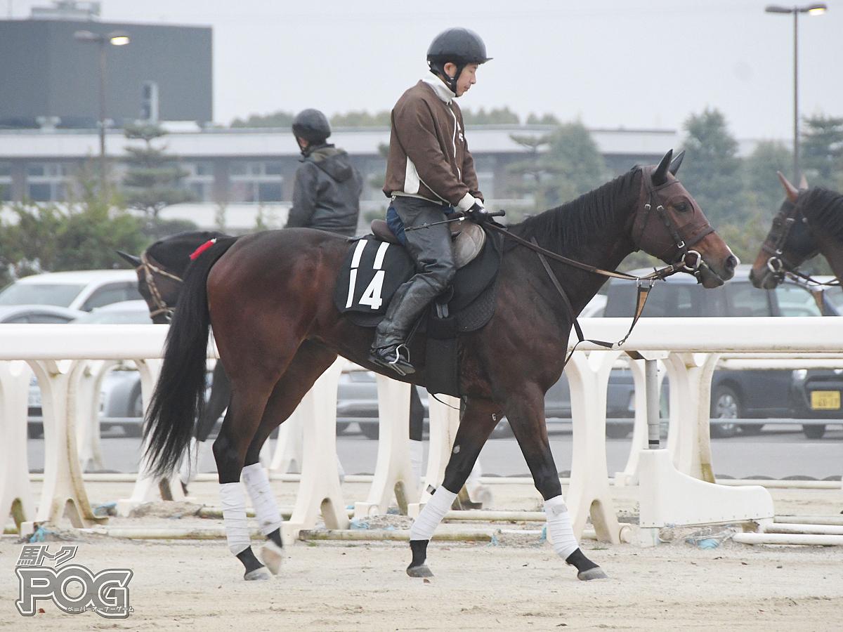 ラファイエの馬体写真