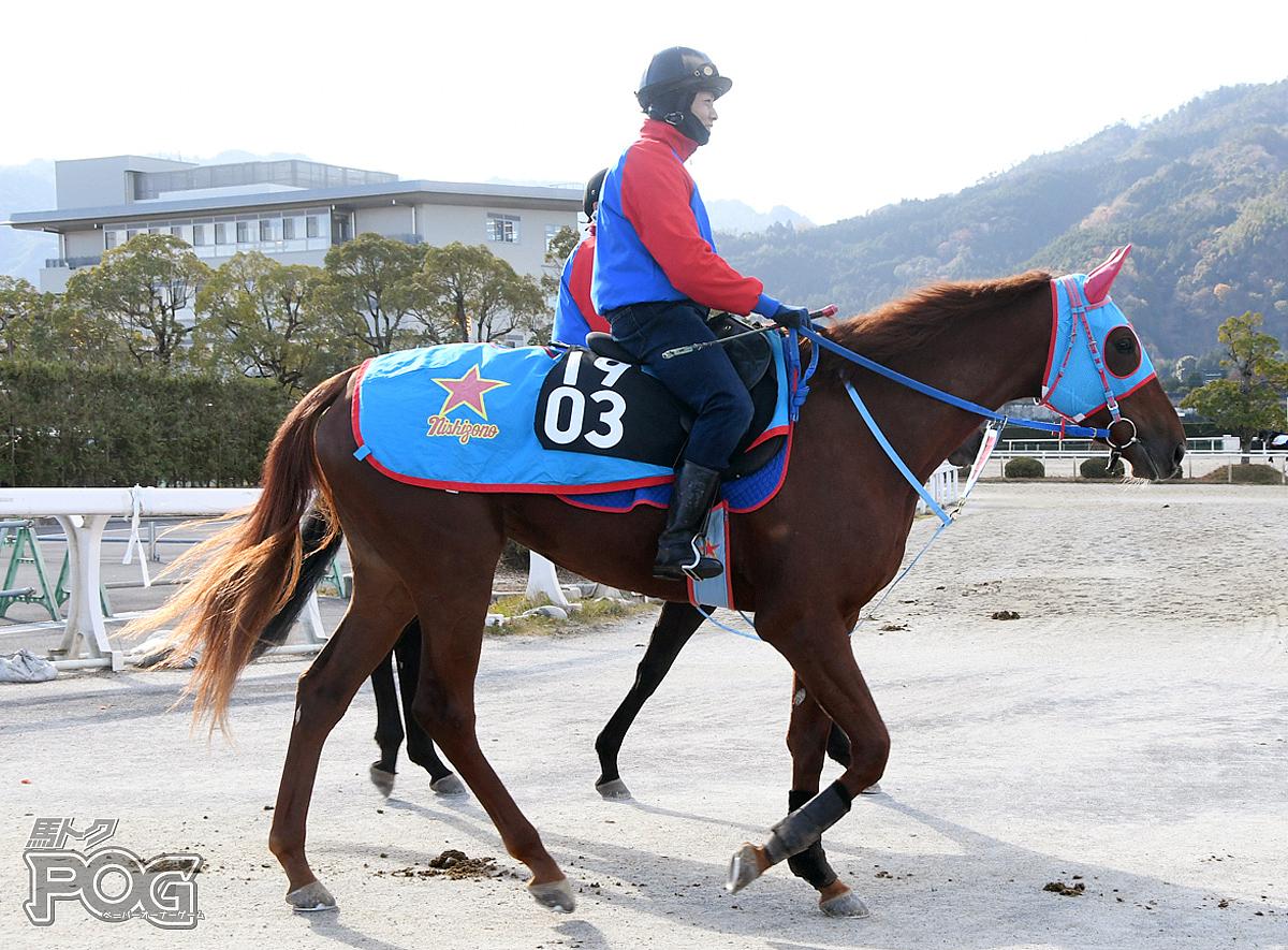 ターコイズの馬体写真