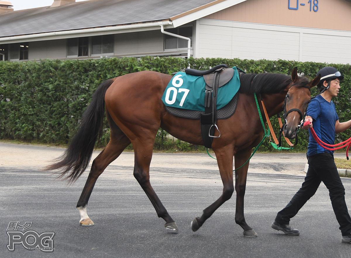 ヤマニンルネッタの馬体写真