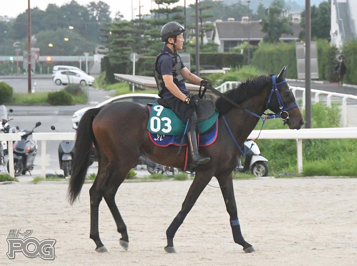 ゲットオーバーの馬体写真