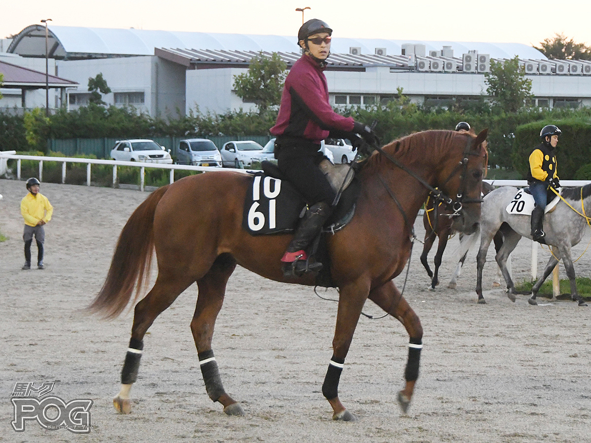 メメントの馬体写真
