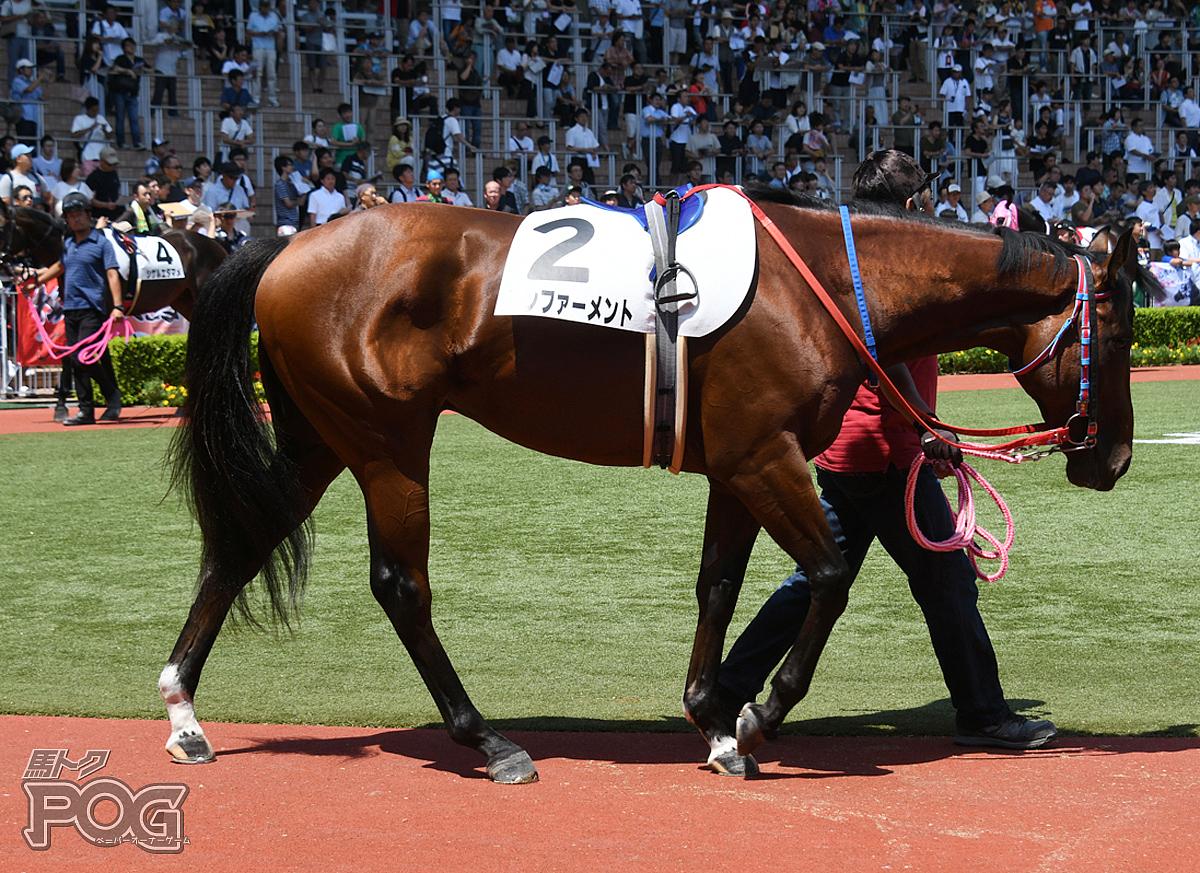 コンファーメントの馬体写真