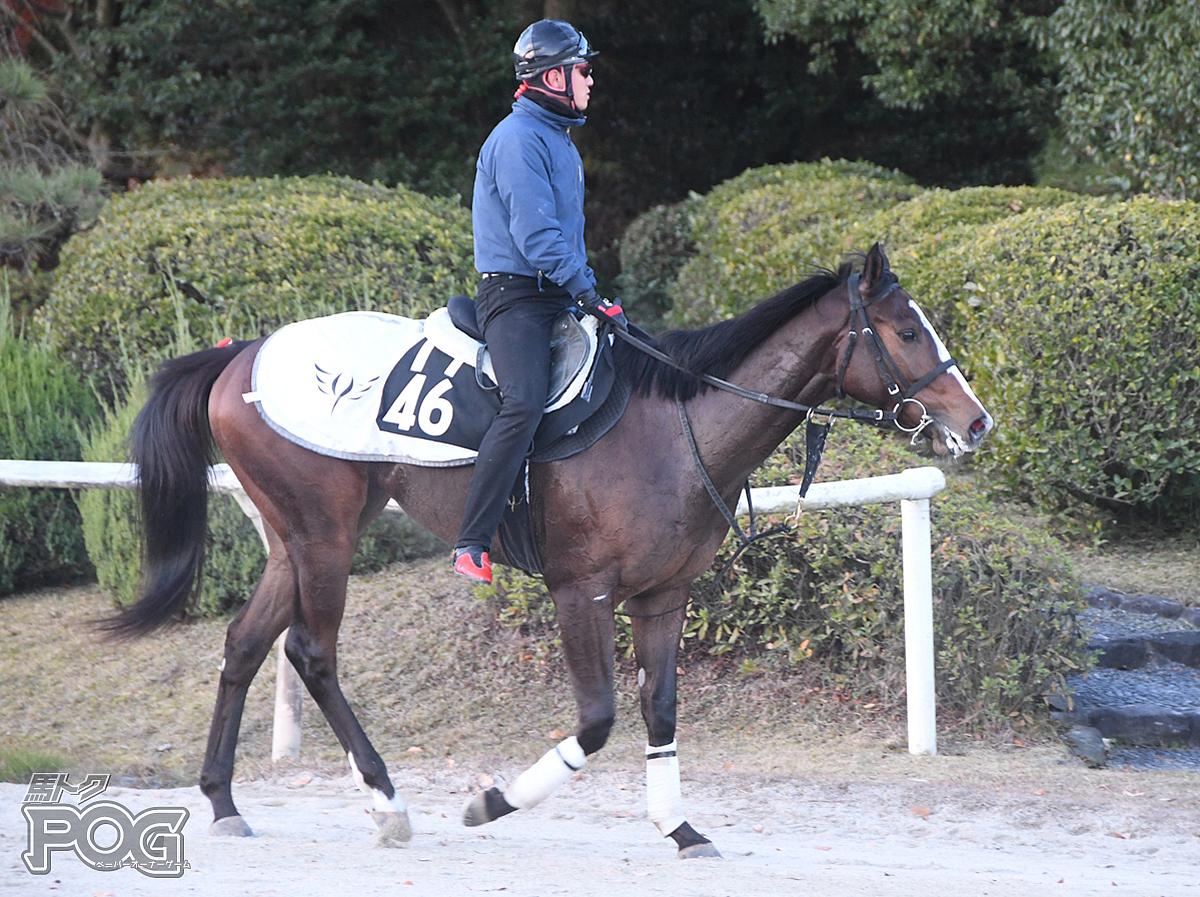 アルジェントの馬体写真