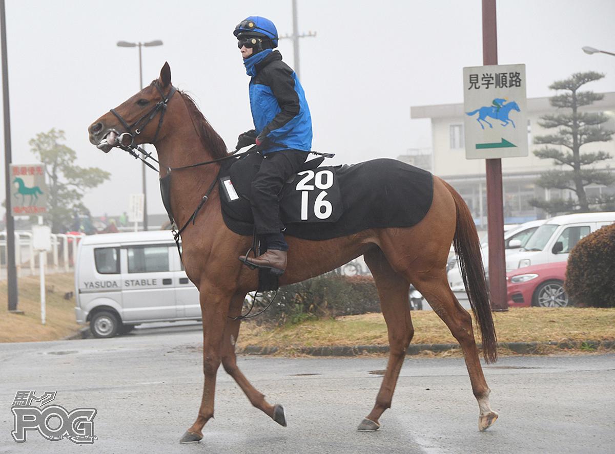 ムーンチャイムの馬体写真