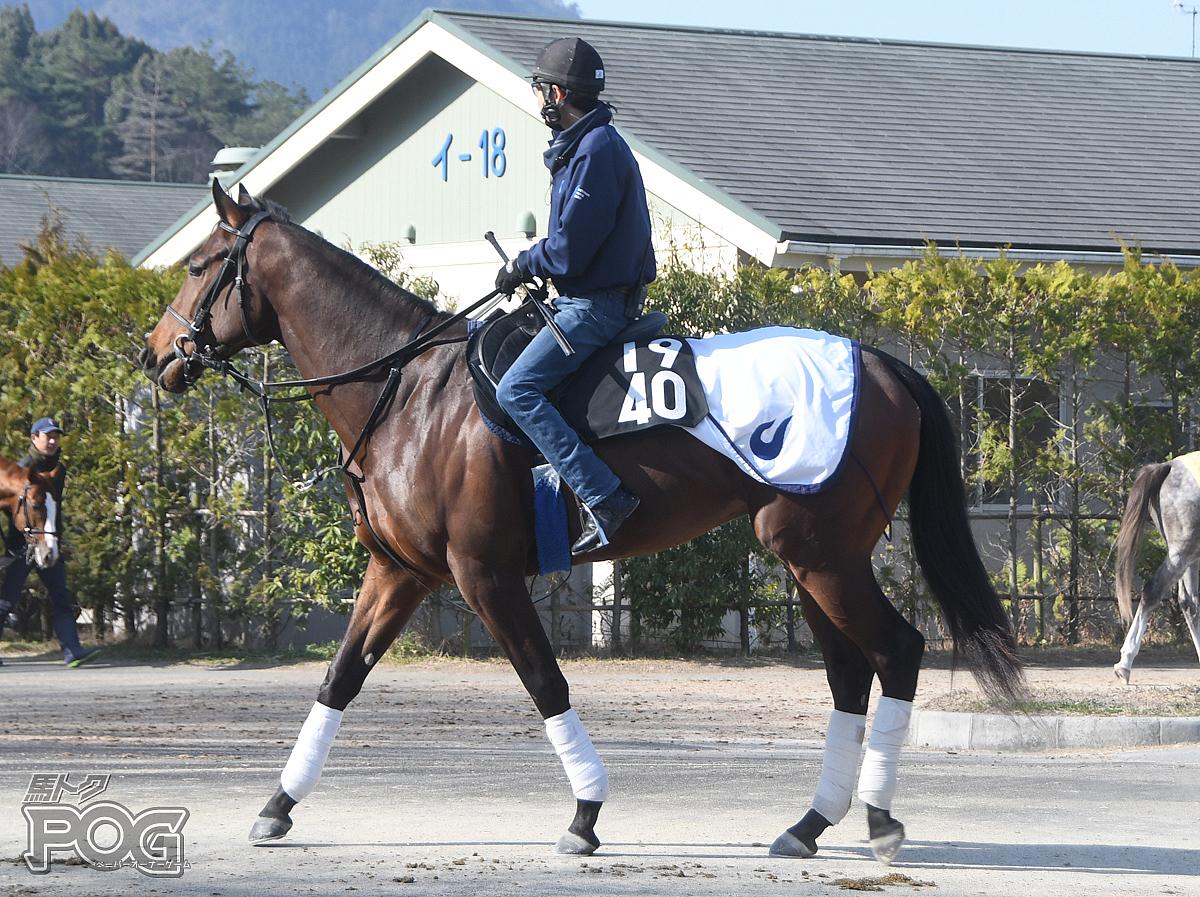 アイスストームの馬体写真