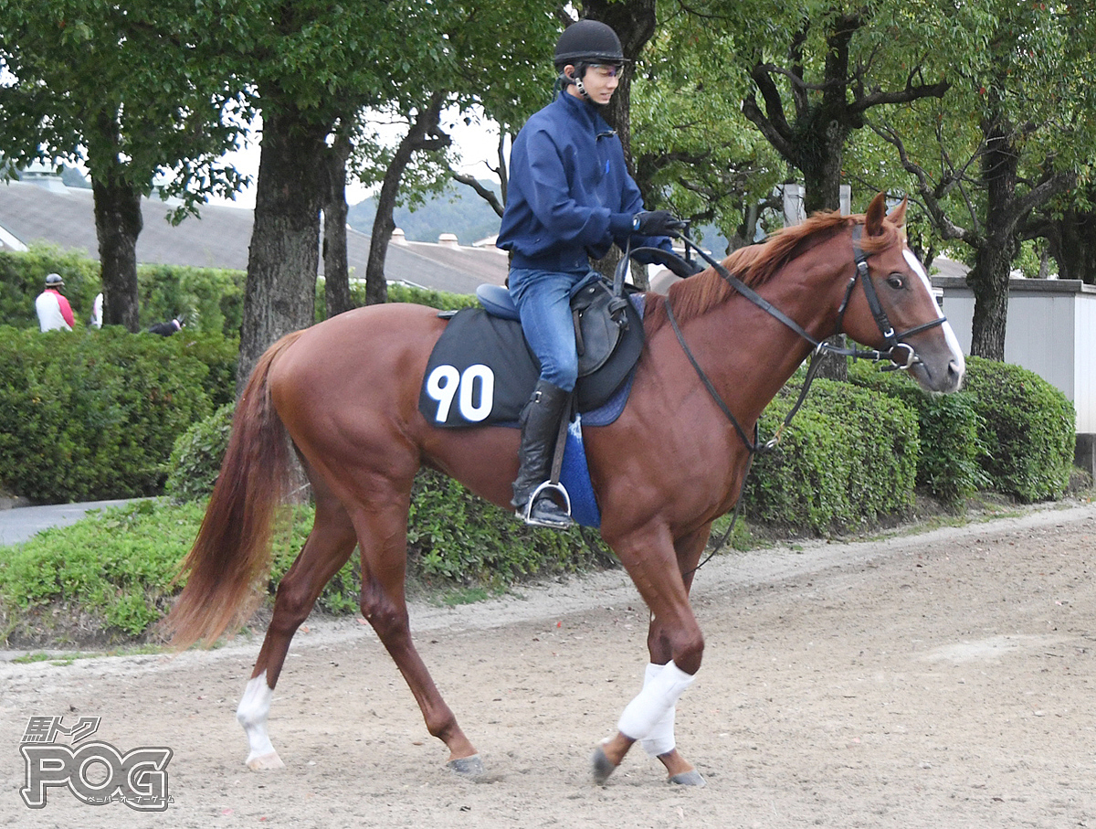 アントーニオの馬体写真