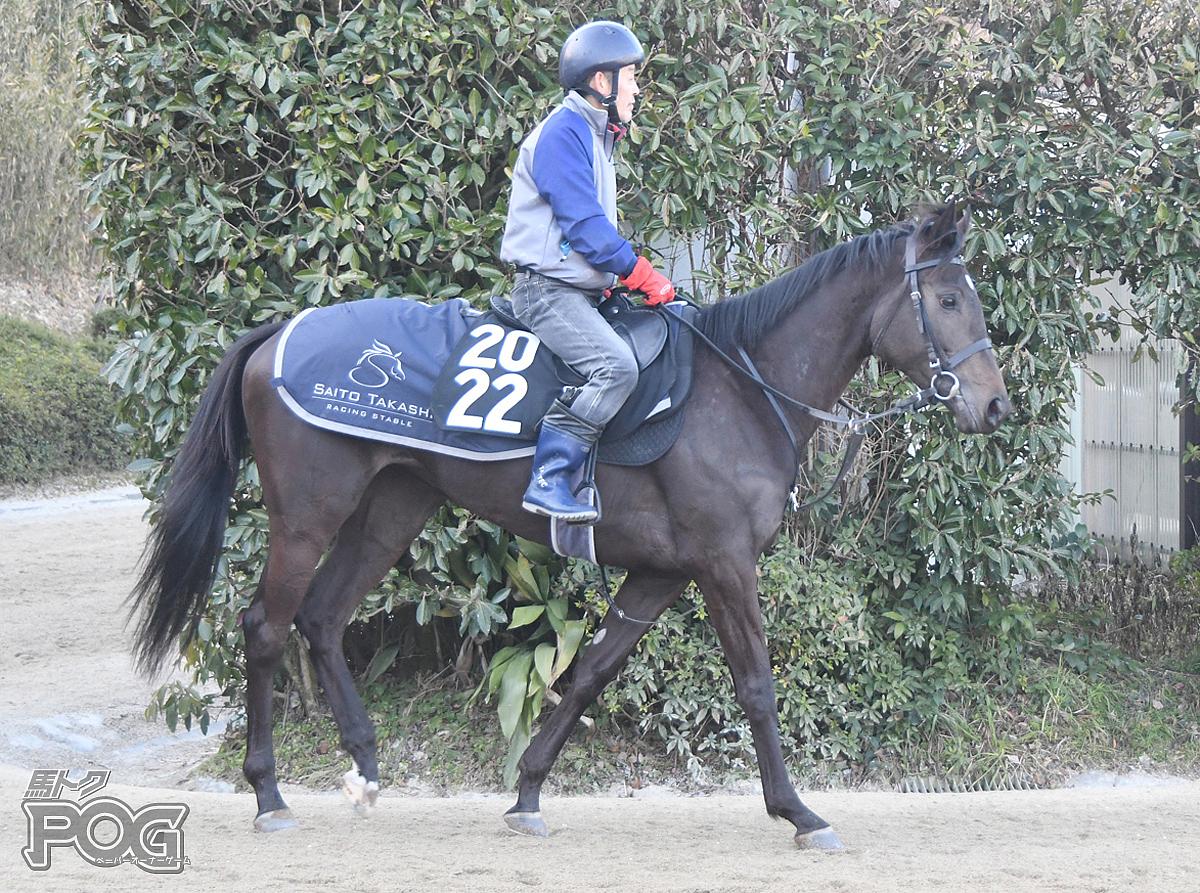 ラッシュオブジョイの馬体写真