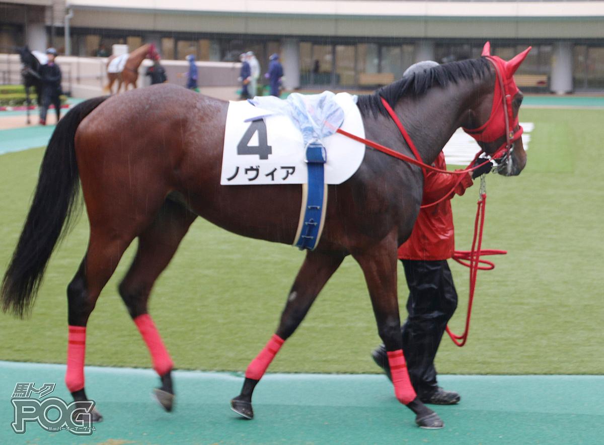 ノヴィアの馬体写真