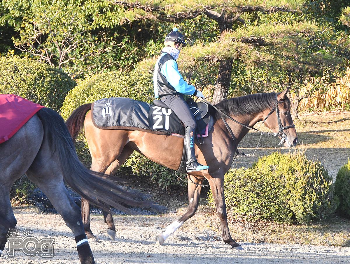 プリンセスケイトの馬体写真