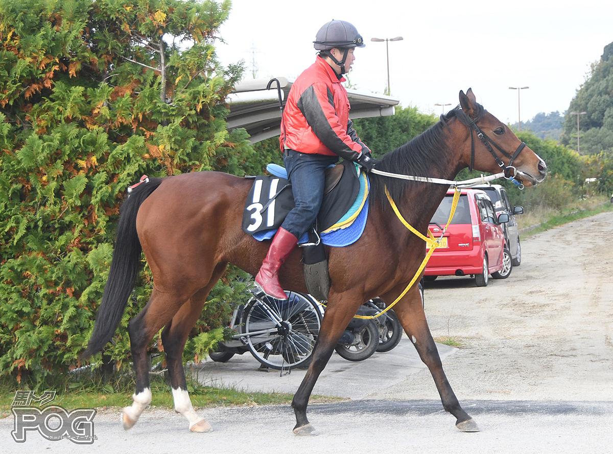リネンゴールの馬体写真