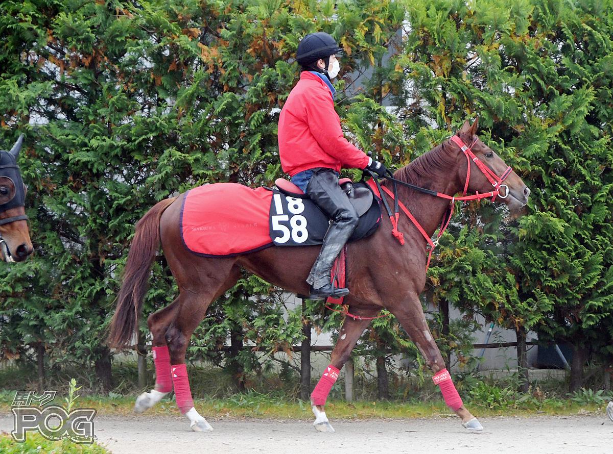 ヒザクリゲの馬体写真