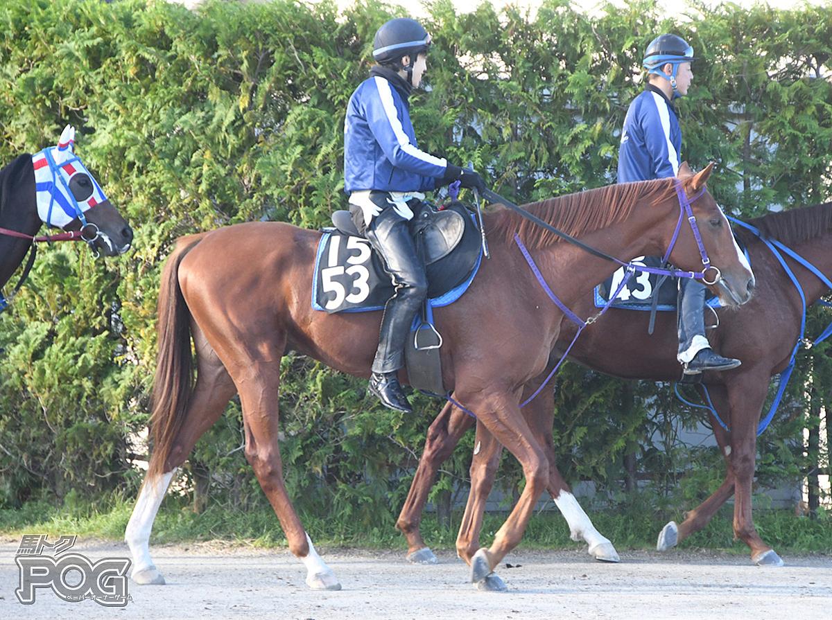 ランパートエースの馬体写真